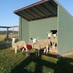 DEANS - Simply Ducky Farm