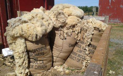 Lismore Sheep Farm & Wool Shop