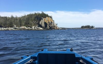 Wild Island Boat Tours at Norse Cove